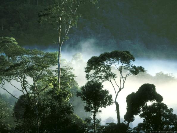 Dawn_burning_off_amazonian_rain_forest_ecuador